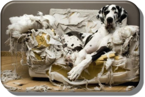dog damaged couch